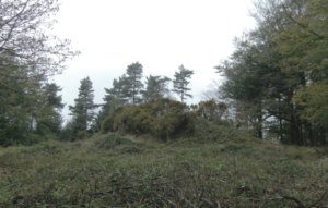 Bronze Age Tumulus at Jack's Castle