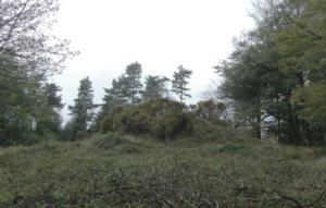 Bronze Age Tumulus at Jack's Castle